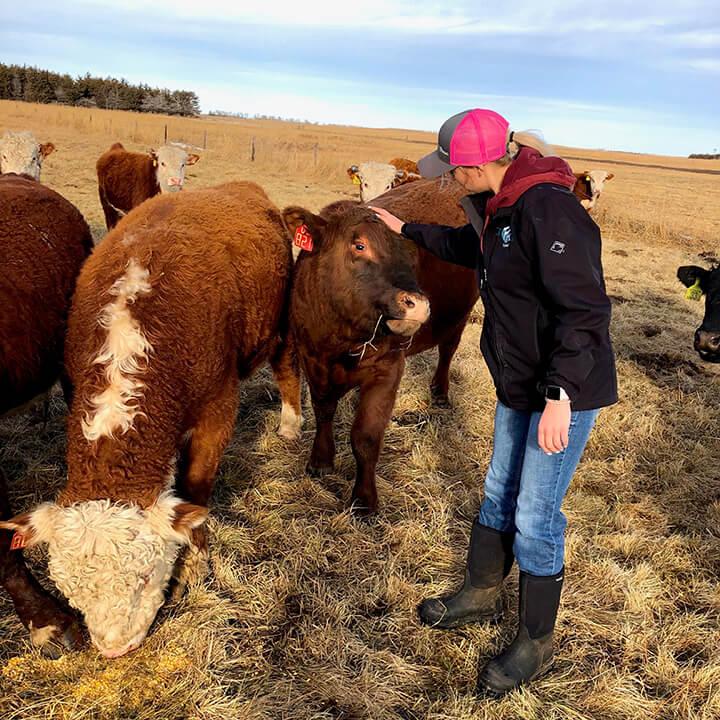 Rachel tending to her cattle
